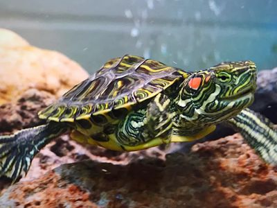 Things You Must Consider While Considering Healthy Turtle Food